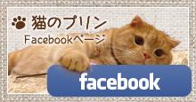 猫のプリンFacebookPage
